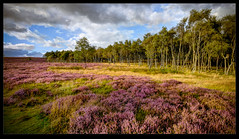 Heather and birch (Nick.Coombs) Tags: blue trees england sky clouds silver landscape woods purple heather district peakdistrict peak heath mauve fujifilm birch silverbirch xt1