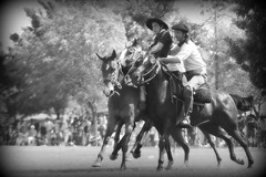 Sacando el hombre (Eduardo Amorim) Tags: horses horse southamerica argentina criollo caballo cheval caballos cavalos pferde cavalli cavallo gauchos pferd pampa besos chevaux gaucho  amricadosul gacho amriquedusud provinciadebuenosaires  gachos  sudamrica sanantoniodeareco suramrica amricadelsur areco sdamerika crioulo caballoscriollos criollos jineteada  pampaargentina americadelsud gineteada crioulos cavalocrioulo americameridionale caballocriollo campeiros campeiro eduardoamorim cavaloscrioulos pampaargentino