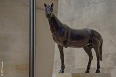 009863 - Malta (M.Peinado) Tags: copyright canon caballo malta escultura estatua hdr 2014 canoneos60d islademalta agostode2014 31082014