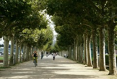 Mainz, Platanenallee am Rheinufer (plane tree alley at the Rhine bank) (HEN-Magonza) Tags: mainz rheinufer rheinlandpfalz rhinelandpalatinate platanenallee planetreealley rhinebank