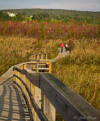 Promenade au marais (josboyer) Tags: de magog lest cantons maraisauxcerisiers