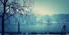 along the old illinois... (BillsExplorations) Tags: snow winter illinoisriver river snowstorm grainterminal hennepin illinois grainelevator cgb weather winterweather fog tree adm cargill grain corn soybeans
