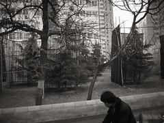 New trees for Shijingshan (chinese johnny) Tags: bw blackandwhite canonsd500 china chinese beijing ambient autobiographical documentaryphotography documentary streetphotography dark reallifenotposed window canonpowershot urbanchina desaturated monochrome moody melancholy photographsofchina flickrunitedaward
