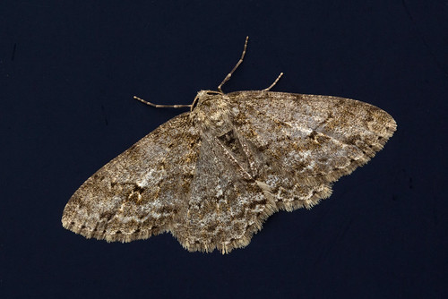 Moth on the Door
