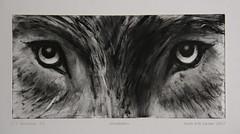 """""""ULVEBLIKK"""" """"Staring wolf"""" (Svein Erik Larsen) Tags: ulv lobo wolf øyne eyes stirre stairing monoprint monotypi tegning maleri drawing animal wildanimal"""