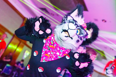 _MG_0727 (Tiger_Icecold) Tags: confuzzled cfz2016 cf2016 furcon furry convention fursuit birmingham party deaddog ddp deaddogparty