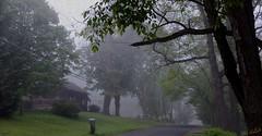 Morning Mist 1 (desouto) Tags: road morning trees fog nikon