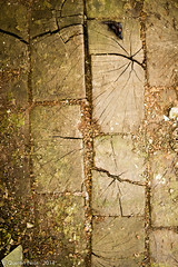 Wooden Floor (KanteTelemaque) Tags: industry warehouse dirt abandon industrie abandonned urbex salet entrept