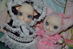 Penny and Mindie (Girly Toys) Tags: penny pangju peach pang ju groove bjd doll dog chien chihuahua fullset normal skin collection campbell mindie missliliedolly miss lilie dolly aurelmistinguette girly toys collectible girlytoys