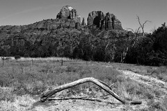 (thpwilliams) Tags: trees summer arizona blackandwhite bw cliff sun white black hot tree art nature monochrome grass landscape dead spring nikon rocks village seasons desert branches perspective sedona sunny az cliffs erosion nationalforest trail sediment northernarizona redrock northern foilage bushes cathedralrock coconino nikond3200 oakcreek thpwilliams