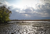 Marsh and sun rays