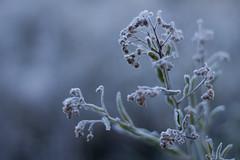 Help me. I'm freezing... (Marcel A. Scaranello) Tags: snow gelo frost neve frio geada