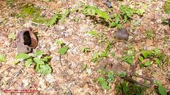 GSMNP Backpack Day 5 - June 27, 2014 - On Eagle Creek Trail (mikerhicks) Tags: usa geotagged unitedstates hiking northcarolina backpacking proctor greatsmokymountainsnationalpark gsmnp eaglecreektrail fontanadam fontanavillage canon7d sigma18250mmf3563dcmacrooshsm geo:lat=3554386312 geo:lon=8374072629
