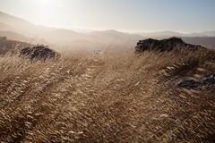 Grass land (Rongzoni) Tags: california sunset marin grasses tiburon mttamalpais ringmountain