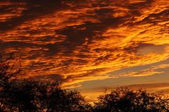 Sunrise 7 9 14 #02 (Az Skies Photography) Tags: morning red arizona sky orange cloud sun black rio yellow skyline clouds sunrise canon skyscape eos rebel gold dawn golden salmon july 9 az rico explore rise daybreak 2014 arizonasky 7914 riorico rioricoaz arizonasunrise t2i arizonaskyline canoneosrebelt2i eosrebelt2i arizonaskyscape 792014 july92014
