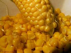 Corn (Grace Pedulla Dillon) Tags: life summer food garden still corn farm seasonal vegetable fresh maize earsofcorn