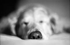 (Dmytro Bondarenko) Tags: portrait bw dog film nose kiev