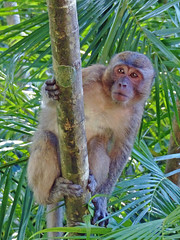 Playful Monkey (brentflynn76) Tags: animal thailand temple monkey photo buddha bamboo jungle cave primate animalplanet suwannakuha
