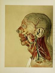 Anglų lietuvių žodynas. Žodis splenius muscle reiškia splenius raumenų lietuviškai.