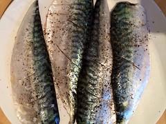 Prepping the mackerel.