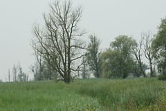 DSC06453 (Ton Smilde) Tags: oostvaardersplassen naturereserveinthenetherlands
