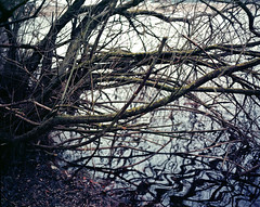 confusing (itawtitaw) Tags: morning winter lake color reflection tree mamiya film nature water silhouette analog reflections landscape woods shadows kodak spiegel tranquility scan naturereserve epson ripples 80mm v700 mamiya7ii ektar100