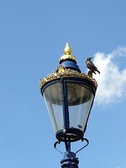 lamp & bird (Judy **) Tags: bird london lamp streetlight streetlamp vogel londen 2014 lantaarn