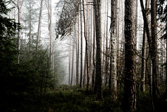 - (christie.rainey) Tags: wood morning trees tree nature fog pine forest landscape moss woods scenery nebel natur pines mystical wald bume morgen baum moos pinewood pinewoods