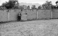 Amantes equus (Felipe Cárdenas-Támara) Tags: iso100 colombia analogphotography kodaktmax rangefindercamera adox leicaiiia analoguephotography elmar9cm epsonperfectionv500photo leicascrewmountcamera leicascrewmountlens adoxadonal felipecárdenastámara