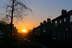 850F2089 - The way to train station (Zoemies...) Tags: street sunset nature netherlands silhouette assen