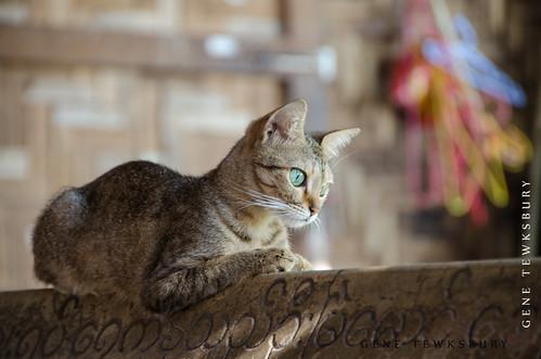 Myanmar_0107_04-23-13-tewksbury