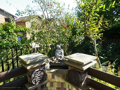imgp7080_PM (Ms. Graveyard Dirt) Tags: tree fruit yard altar ritual entry