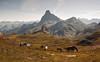 Paisaje con caballos/Landscape with horses (zubillaga61) Tags: horses landscape caballos paisaje pirineos pyrennes mididossau