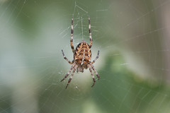 Spider 2 (Bjrn Lundby) Tags: insect spider insects
