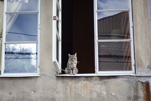 Today's Cat@2014-08-22