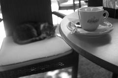 A cat of coffee please (chat des Balkans) Tags: cup coffee caf cat table relax chat sleep serbia creativecommons espresso belgrade guest beograd maka srbija serbian serbe kafa serbie serbiastreet ruedeserbie