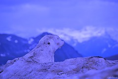Sentinel of ice (Stievesox) Tags: sculpture mountain ice nikon marmot 18200 marmotta ghiaccio lazybones d3100