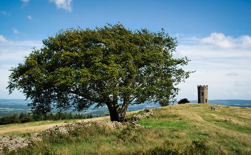 Tree and Folly