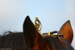 IMG_3712-k (Mandy Bramavi) Tags: show horse shire