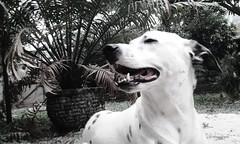 Buddy (camilaoliveira31) Tags: dog cute buddy cao cahorro