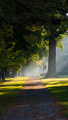 Morning Light (QuantumJedi) Tags: morning trees light mist chicago sidewalk southside 2014 johnmagruderphotography