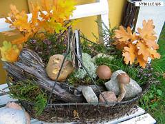 zHerbstdeko (sybilleus) Tags: schweden herbst natur holz bltter stein moos pilz korb dekoration