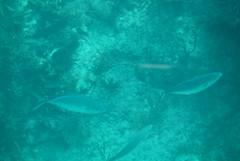 18. John Pennekamp glass bottom boat (Misty Garrick) Tags: johnpennekamp johnpennekampreef johnpennekampcoralreefstatepark coralreef florida keylargofl keylargo floridakeys atlanticocean