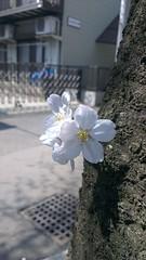 IMAG1624 (mikaos/米高) Tags: 日本東京 htconex