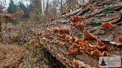 Pilze auf dem Baumstamm