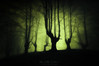 Akelarre (Mimadeo) Tags: scary forest fear horror mood landscape magic tree nightmare light nature mystery spooky darkness halloween woods evil creepy fantasy gothic mysterious surreal enchanted ghost atmosphere green trunk sunlight twisted dark night moonlight monochrome