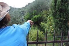 Seeking for lemons (polymela .) Tags: blue water pine lemon portofino 1stday pinie bluacqua