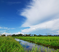 Penaga, Butterworth (Micartttt) Tags: field paddy malaysia butterworth penaga micarttttworldphotographyawards micartttt