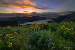 Columbia Dawn (NW Vagabond) Tags: clouds oregon sunrise dawn washington cliffs columbiariver naturereserve lupine rowena balsamroot 2014 tommccall