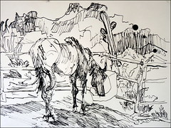 Ruby and Superstitions (Kerry Niemann) Tags: horse inkdrawing apachejunction